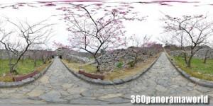 140120_nakijin_02s