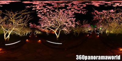 140124_nakijin_05s