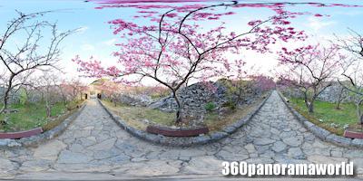 140127_nakijin_01s
