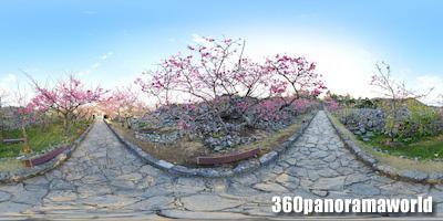 140127_nakijin_02s