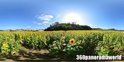 140128_himawari_02s