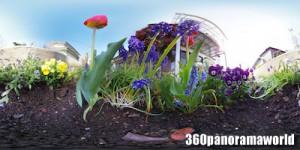 140423_flower_02xs